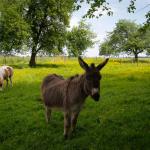 kellerwirt-familie-pony-esel